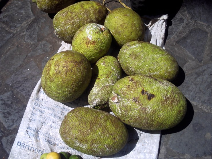 YUMMM, BREADFRUIT!!!!